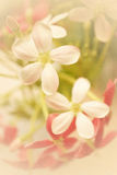Sweet Color Flowers In Soft Style On Mulberry Paper Texture Stock Photo