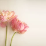 Sweet Color Lotus In Soft Color And Blur Style On Mulberry Paper Texture Stock Photography