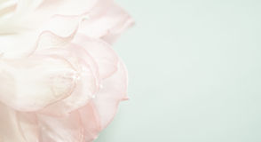 Sweet color lotus petals in soft color and blur style Royalty Free Stock Photos