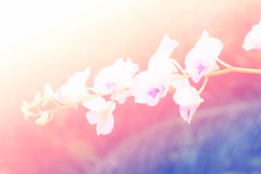 Sweet color orchid in soft color and blur style for background Stock Photos