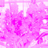 Sweet color orchid in soft color and blur style. Royalty Free Stock Photography