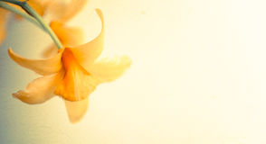 Sweet color orchids in soft color and blur style Royalty Free Stock Photography