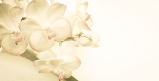 Sweet color orchids in soft color and blur style on mulberry paper texture Royalty Free Stock Photos