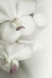 Sweet color orchids in soft color and blur style on mulberry paper texture Stock Images