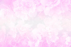 Sweet color pink flower Royalty Free Stock Image