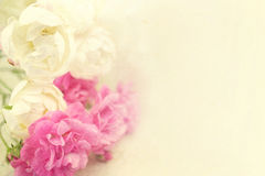 Sweet color roses on mulberry paper texture Stock Photos