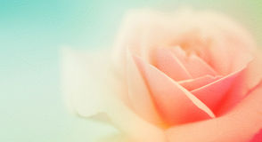 Sweet color roses in soft and blur style on mulberry paper texture Royalty Free Stock Photos