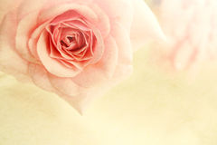 Sweet color roses in soft color and blur style on mulberry paper texture Royalty Free Stock Image