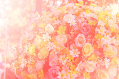 Sweet color in soft style background Stock Photos