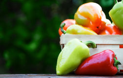 Sweet colorful bell peppers on rustic background Stock Images