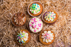Sweet colorful muffins with butter cream on hay background Stock Image