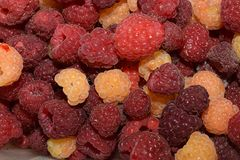 Sweet colorful raspberry from my garden royalty free stock photos