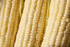 Sweet corn Royalty Free Stock Photo