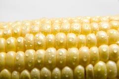The sweet corn Stock Photos