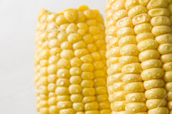 The sweet corn Royalty Free Stock Photography