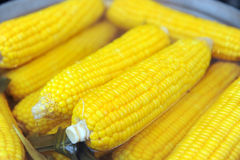 Sweet corn. Close up of sweet corn Stock Images