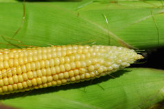 Sweet corn Stock Photos