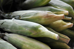 Sweet corn. A stack of sweet corn Stock Images