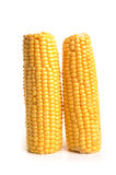 Sweet corn. Photographed in studio against a white background Stock Images