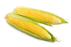 Sweet corn. Sweet ripe corn isolated on the white Royalty Free Stock Photos