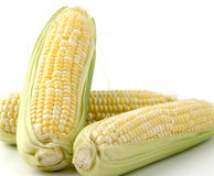 Sweet Corn. Three ears of sweet corn on a white background Stock Photos
