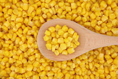 Free Sweet Corn Royalty Free Stock Photo - 25190585