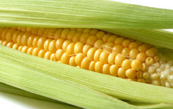 Sweet corn. Spread sweet corn cob, healthy legume stock photography