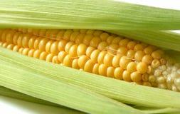 Sweet corn. Spread sweet corn cob, healthy legume Stock Photography