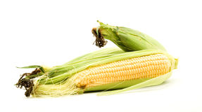 Sweet corn Stock Photography