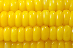 Sweet corn background. Close-up of yellow sweet corn background Royalty Free Stock Image