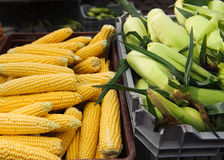 Sweet corn Royalty Free Stock Photos