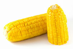 Sweet corn boil ready for eat. Isolated royalty free stock photos