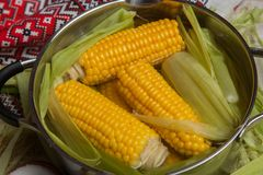 Sweet corn boil with salt. cooked sweet corn in pot on wooden table. Sweet corn boil with salt. cooked sweet corn in pot on wooden table stock photography