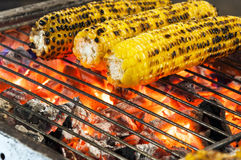 Sweet corn on charcoal bbq. Three grilled sweet corn on charcoal barbecue close up Royalty Free Stock Images