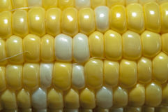 Sweet corn macro Royalty Free Stock Image