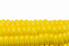 Sweet corn Royalty Free Stock Image