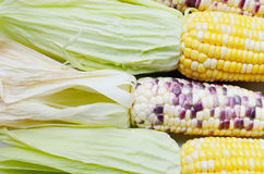 Sweet corn, Close up Stock Photo
