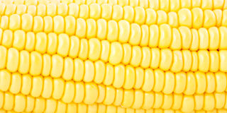 Sweet corn closeup for background or wallpaper Stock Images