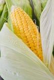Sweet corn closeup Royalty Free Stock Photography