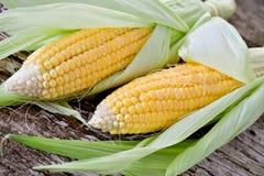 Sweet corn closeup Stock Photos