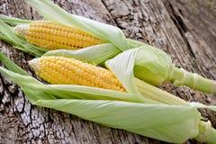 Sweet corn closeup Stock Image