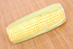 Sweet corn cob Royalty Free Stock Images