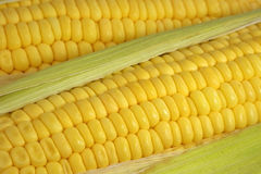 Sweet corn cob. Stock Photo