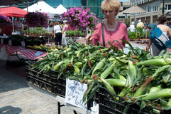 Sweet Corn on the Cob at Farmer's Market Stock Photos