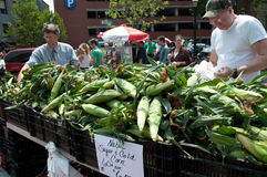 Sweet Corn on the Cob at Farmer's Market Royalty Free Stock Photography
