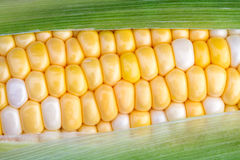 Sweet Corn on the Cob Stock Photo