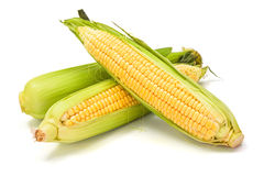 Sweet corn cob with green leaves Stock Photos