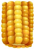 Sweet corn on the cob Royalty Free Stock Photo