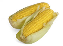 Sweet corn cob. Stock Images
