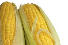 Sweet corn cob. Royalty Free Stock Images